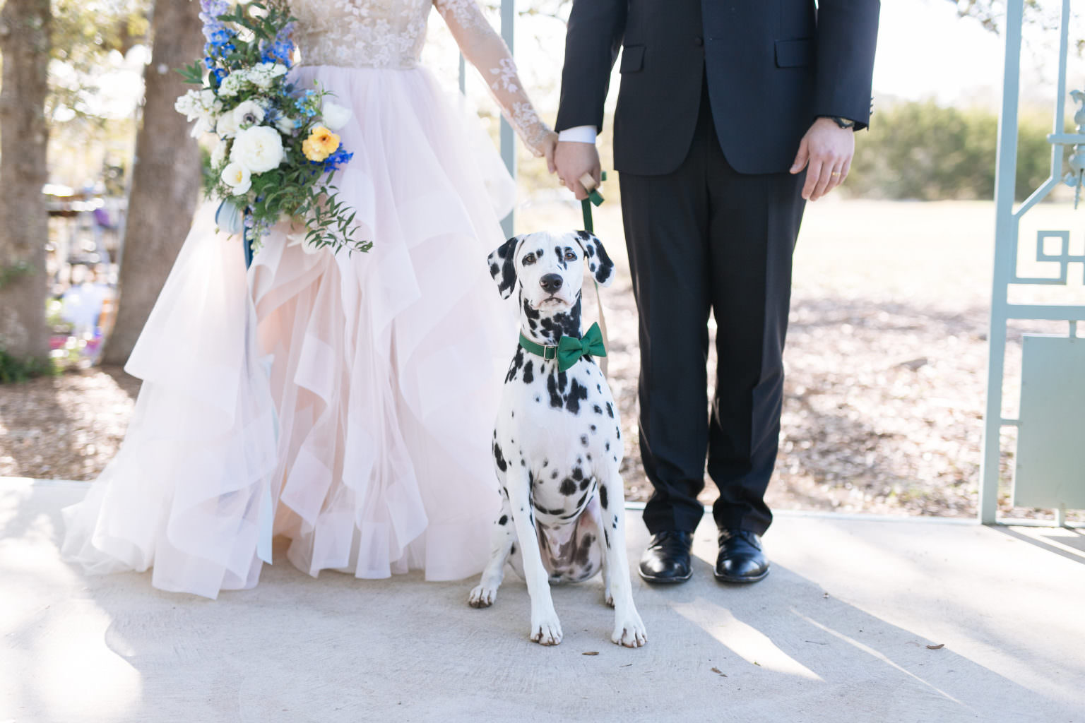 Wedding couple with black and white spotted dog